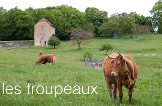 Les troupeaux